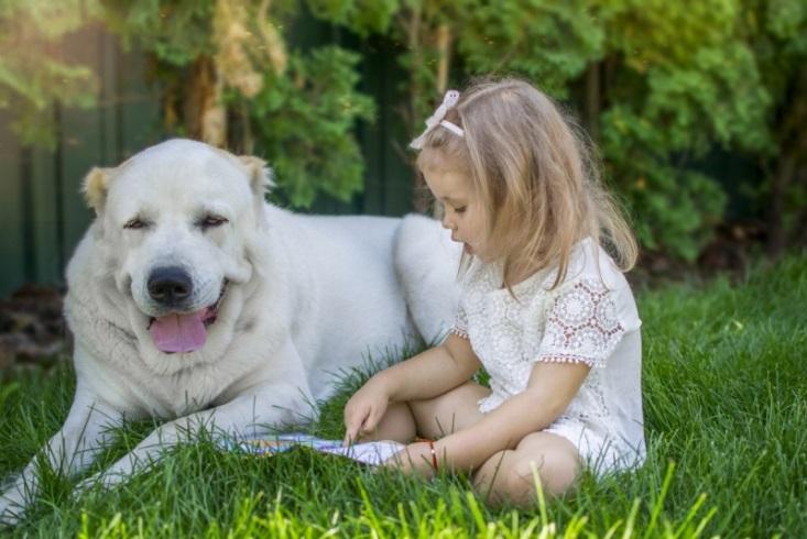 Армянский волкодав и ребенок